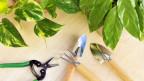 Audio «Verjüngungskur für Zimmerpflanzen» abspielen.
