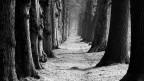 Der Weg in die Freiheit (Bild: Pixelio_Peter Hebgen)