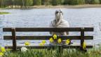 Am See sitzt eine Frau auf einer Sitzbank.
