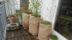 Pflanzen in Töpfe auf dem Balkon.