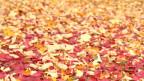 Herbstlaub: Dünger oder Igelhotel