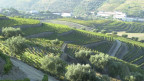 Weinbaugebiet in Portugal.