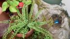 Streifenfarn in einem Blumentopf neben einem robusten Ast.