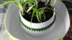 Pflegetipps für Zimmerpflanzen