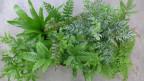 Audio «Mit Pflanzen werden Badezimmer zur grünen Oase» abspielen.