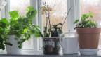 Zimmerpflanzen auf der Fensterbank..