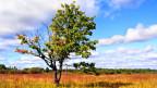 Ob wohl dieser Baum auch arabisch spricht?