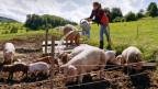 Eine Bäuerin gibt draussen in der Natur Schweinen frisches Wasser.