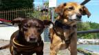 Die Hunde Felix aus Serbien und Toni aus Ungarn haben in der Schweiz eine neue Heimat gefunden.