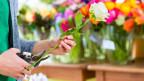 Ein Florist schneidet eine Rose.