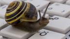 Computer im Schnägglitempo.
