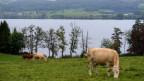 Der Baldeggersee leidet unter der starken Landwirtschaft rundherum.
