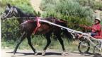 Heidi Siegel sitzt auf dem Rennwagen, vorne ist das Pferd eingespannt.