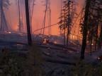 Ein Wald brennt
