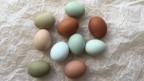 Hühnereier in diversen Farben.