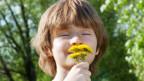 Ein Junge riecht an einem Strauss aus Löwenzahn.
