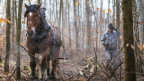 Ein Arbeitspferd im Wald