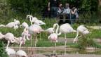 Hans Wackernagel im Gespräch beim Flamingo-Gehege