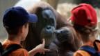 Von Tieren lernen: Kinder im Zoo Basel