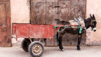 Ein Esel zieht einen Wagen hinter sich her.