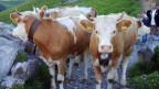 In Adlboden halten überdurchschnittliche viele Einwohner Kühe.
