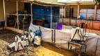 Audio «Ebola, besiegt und doch nicht» abspielen.