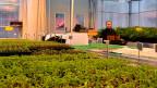 Die aus Burma geflüchtete Marmony Shee pflanzt auf einem gemeindefinanzierten Hof biologisches Gemüse.