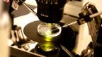 Petrischale unter Mikroskop
