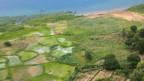 Kleinbauern setzen auf Gen-Mais statt traditionellen Anbau.
