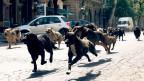 In «White Dog» übernehmen Hunde die Strassen.