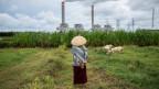 Eine Schafhirtin in Jepara auf Java/Indonesia.