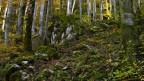 Der Biologe David G. Haskell hat ein Jahr ein Stück Waldboden untersucht.