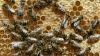 Nicht nur gut für Honig.