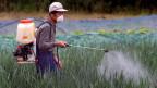 Mann sprüht Pestizide auf ein Feld.