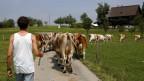 Zum Leben reicht's knapp: Biobauer mit Kuhherde.