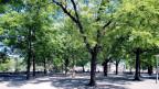Ein Stadtpark mit vielen Bäumen. Im Hintergrund sind vereinzelt Menschen zu sehen.