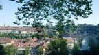 Durch den Klimawandel wird die Existenz des Stadtbaumes zunehmend in Frage gestellt.
