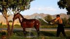 Ab Mitte des 19. Jahrhunderts verlor das Pferd an Bedeutung als Nutztier.
