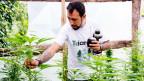 In Uruguay ist der Anbau und der Besitz von Cannabis legal. Die Droge wird jedoch stark reguliert und kontrolliert.
