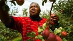 Die internationalen Nahrungsmittelkonzerne verdrängen die einheimischen Bauern in Südafrika vom Markt.