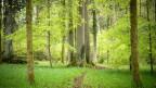 Ein Stück Wald .