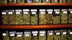 In mehr als der Hälfte der US-Bundesstaaten haben die Amerikaner legalen Zugang zu medizinischem Cannabis.