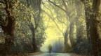 Mann spaziert auf einem Weg durch einen Wald.