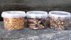 Verzehrfertige Mehlwürmer, Wuestenheuschrecken und Hausgrillen (von links nach rechts).