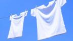 Weisse T-Shirts – zeitlos und immer gut kombinierbar, aber viel Geld möchte man dafür nicht ausgeben.