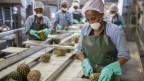 Fabrikarbeiterinnen in Kenia produzieren Ananassaft
