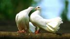 «Kritik der Vögel» ein Buch der Brüder Jürgen und Thomas Roth