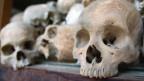 Verschiedene menschliche Schädel