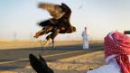 Mann mit seinem Falke
