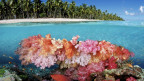 Korallenriff vor der Insel Fidschi